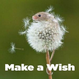 Make a Wish and keep your hopes high. Optimism is a winning spirit for success in life