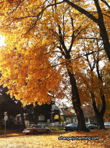 Fall Autumn Equinox - The beautiful colors and changes during this season can bring difficult struggles