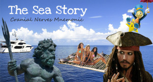 Cranial Nerves Mnemonic – The Sea Story